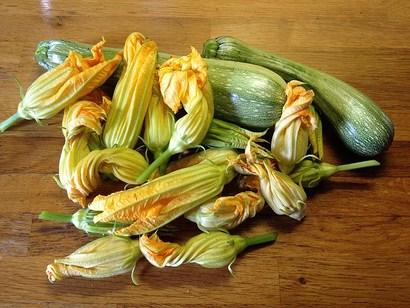 fiori di zucca impanati